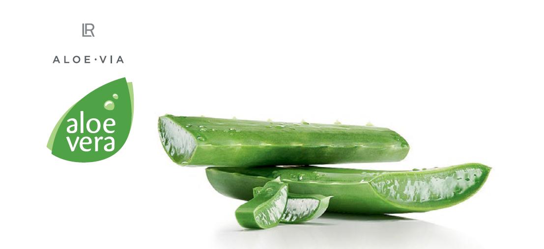 Повече за растението Aloe Vera - поръчай онлайн продукти LR Алое Вера